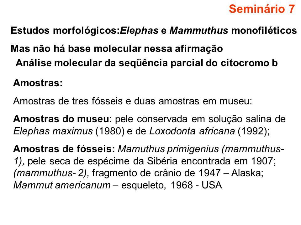 Seminário 7 Estudos morfológicos:Elephas e Mammuthus monofiléticos
