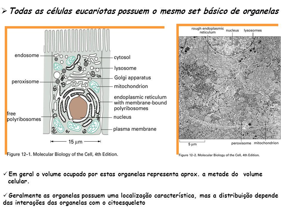 Todas as células eucariotas possuem o mesmo set básico de organelas