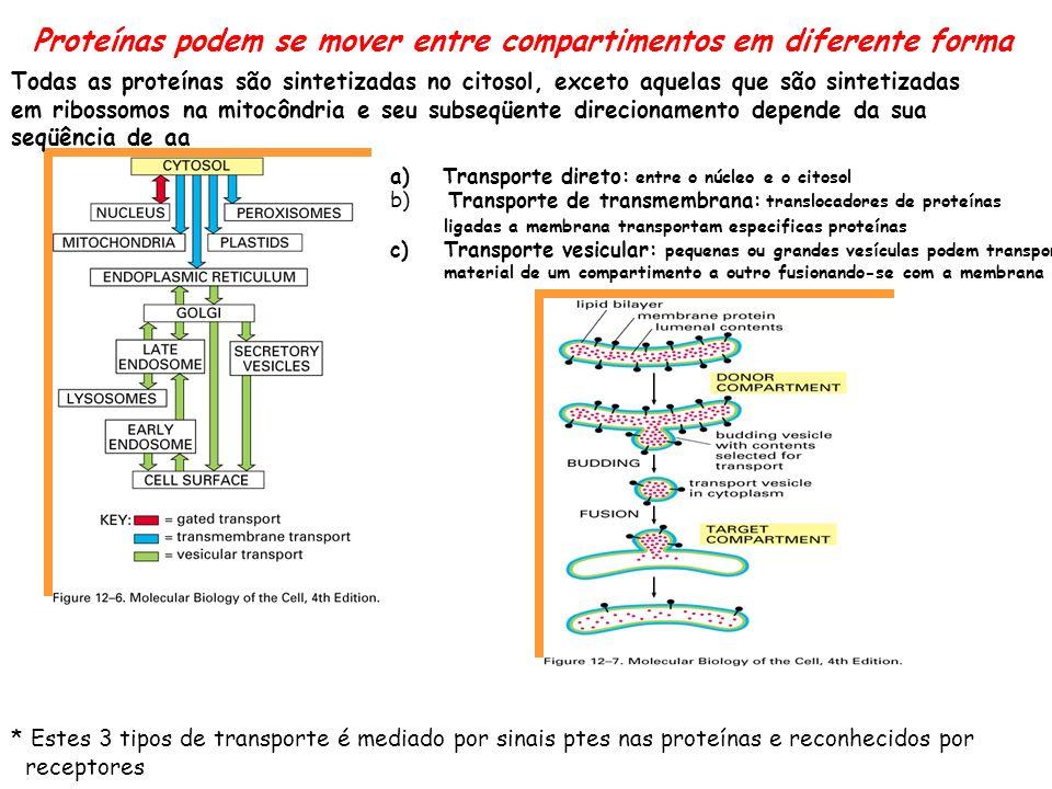 Proteínas podem se mover entre compartimentos em diferente forma