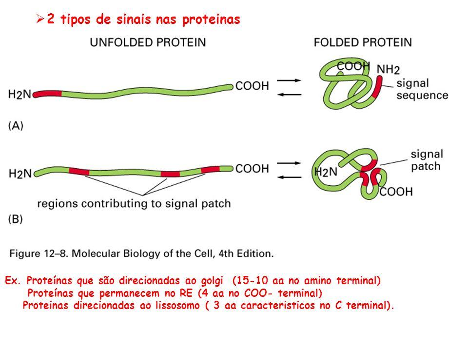 2 tipos de sinais nas proteinas
