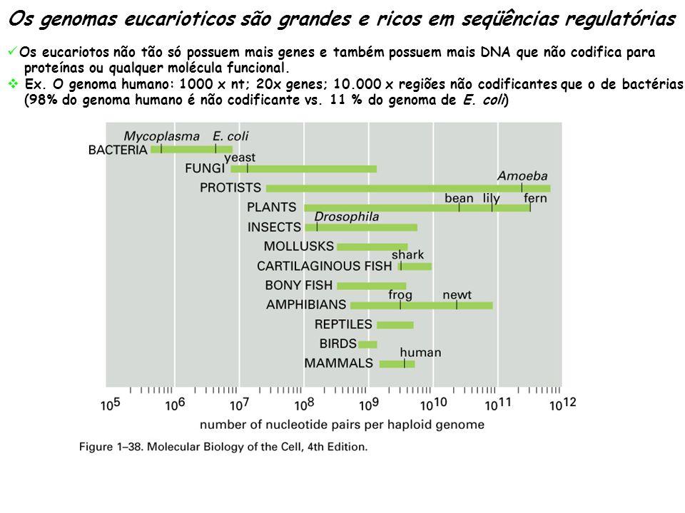 Os genomas eucarioticos são grandes e ricos em seqüências regulatórias