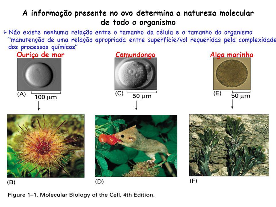 A informação presente no ovo determina a natureza molecular
