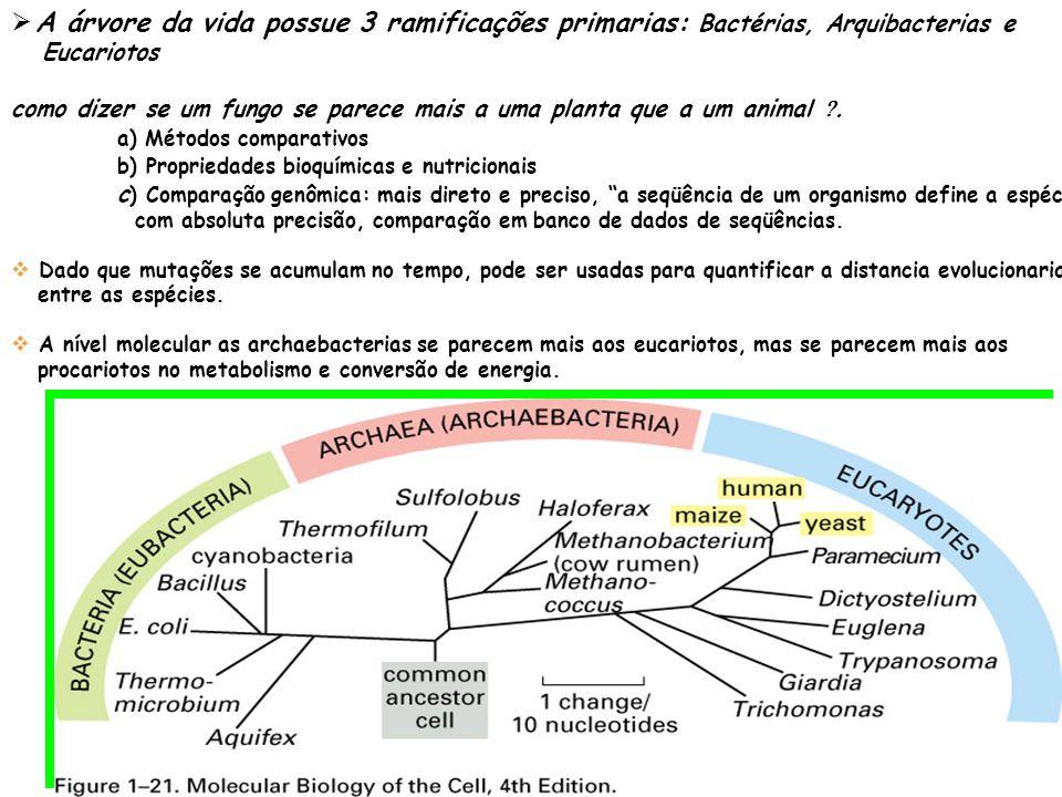 A árvore da vida possue 3 ramificações primarias: Bactérias, Arquibacterias e