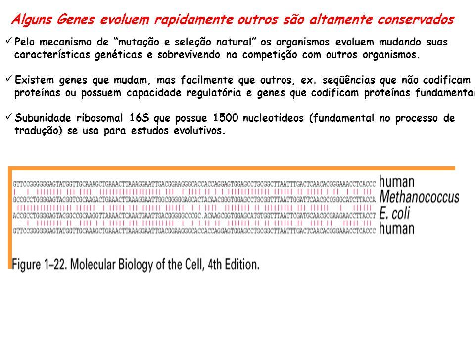 Alguns Genes evoluem rapidamente outros são altamente conservados