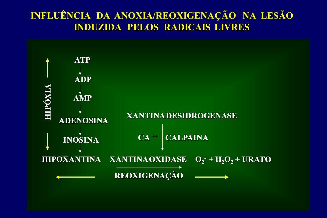 INFLUÊNCIA DA ANOXIA/REOXIGENAÇÃO NA LESÃO