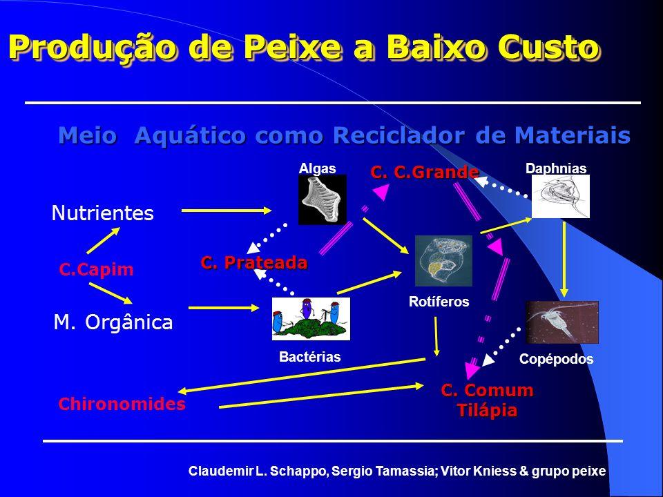Meio Aquático como Reciclador de Materiais