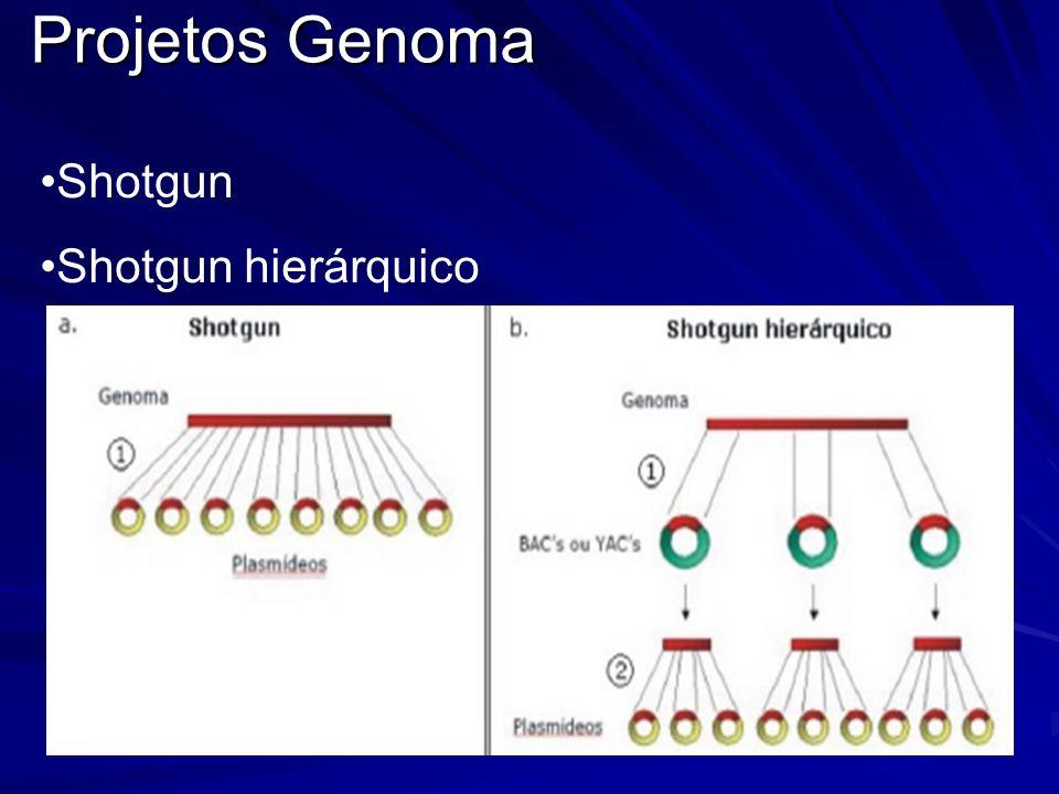 Projetos Genoma Shotgun Shotgun hierárquico