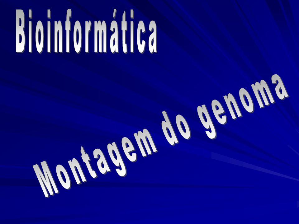 Bioinformática Montagem do genoma