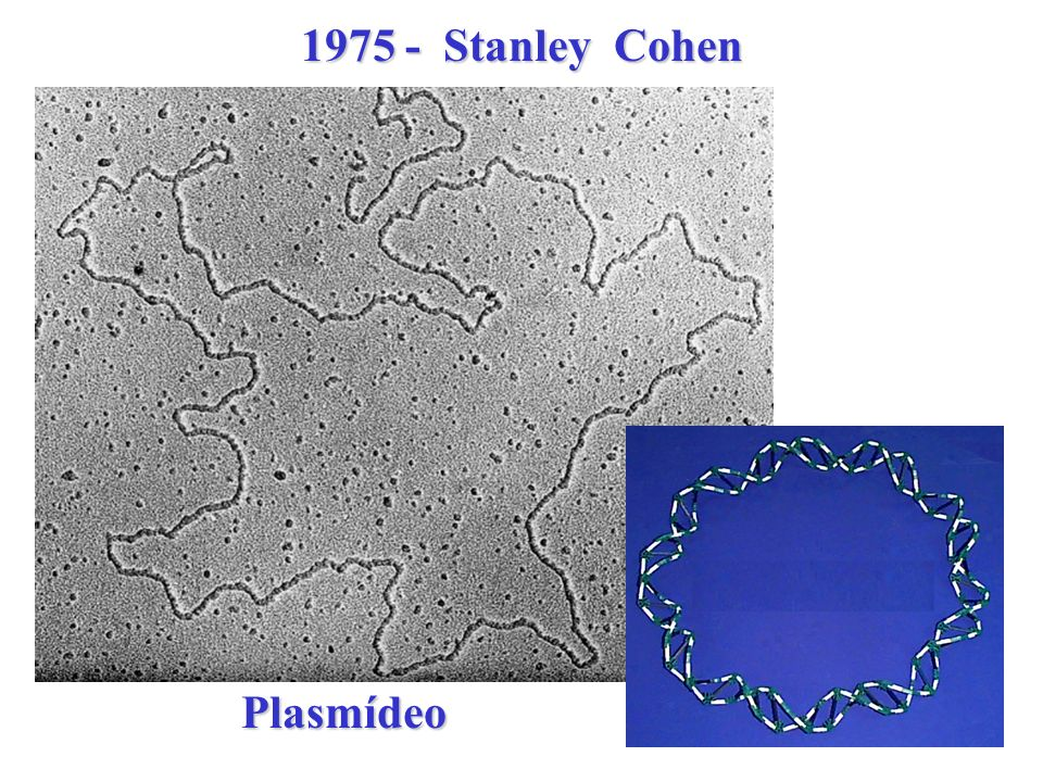 1975 - Stanley Cohen Plasmídeo