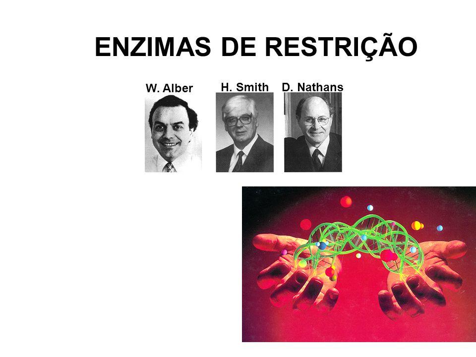 ENZIMAS DE RESTRIÇÃO W. Alber H. Smith D. Nathans