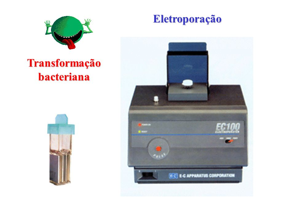 Transformação bacteriana