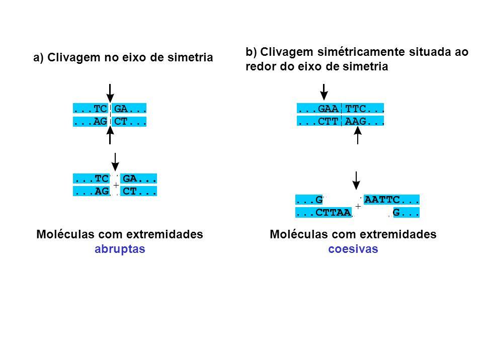 b) Clivagem simétricamente situada ao redor do eixo de simetria