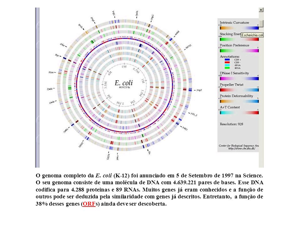O genoma completo da E. coli (K-12) foi anunciado em 5 de Setembro de 1997 na Science. O seu genoma consiste de uma molécula de DNA com 4.639.221 pares de bases. Esse DNA codifica para 4.288 proteinas e 89 RNAs. Muitos genes já eram conhecidos e a função de outros pode ser deduzida pela similaridade com genes já descritos. Entretanto, a função de 38% desses genes (ORFs) ainda deve ser descoberta.