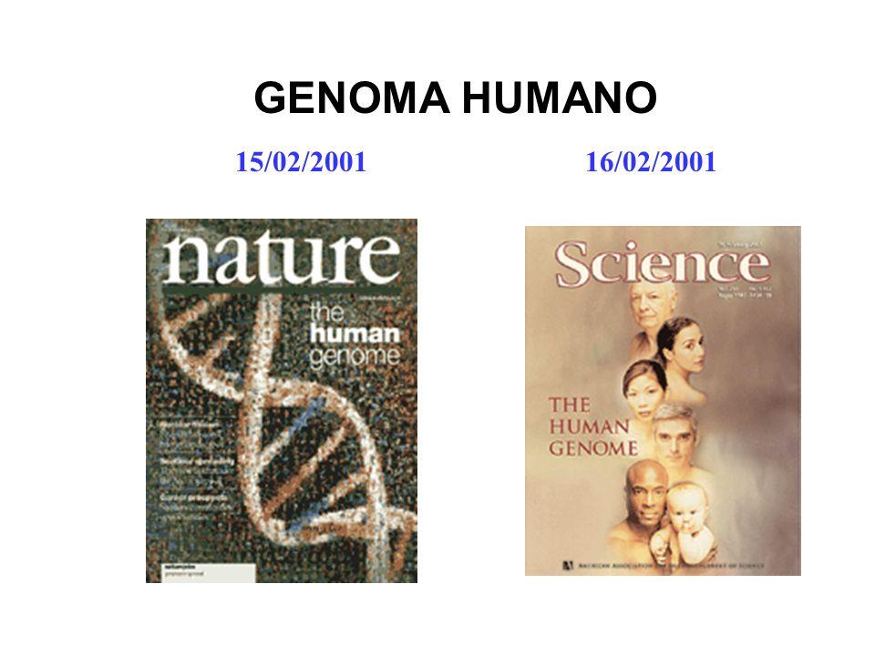 GENOMA HUMANO 15/02/2001 16/02/2001