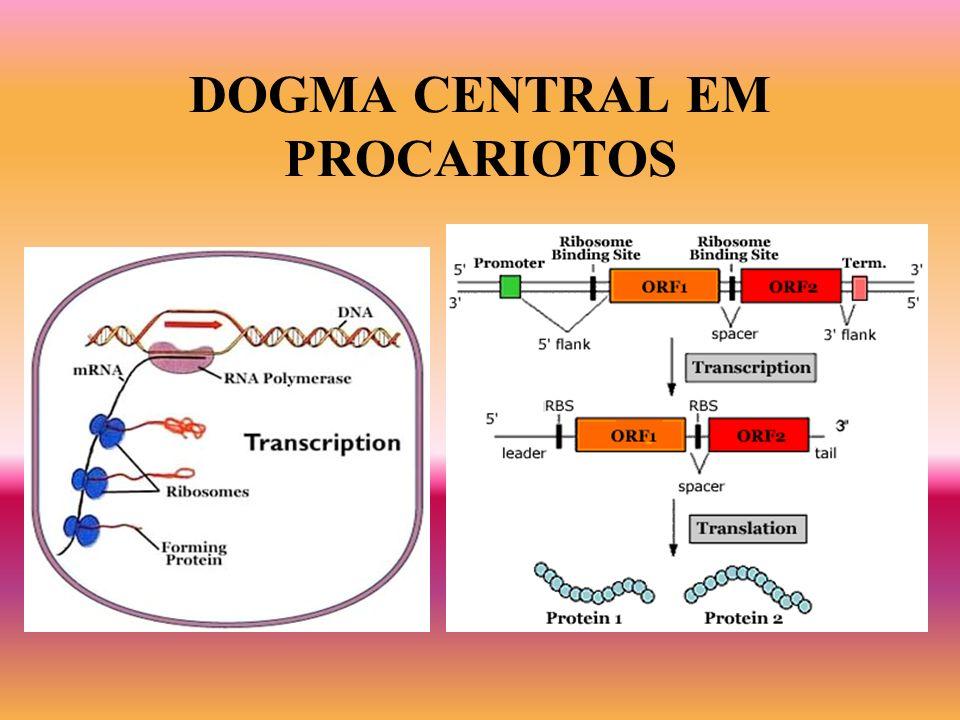 DOGMA CENTRAL EM PROCARIOTOS