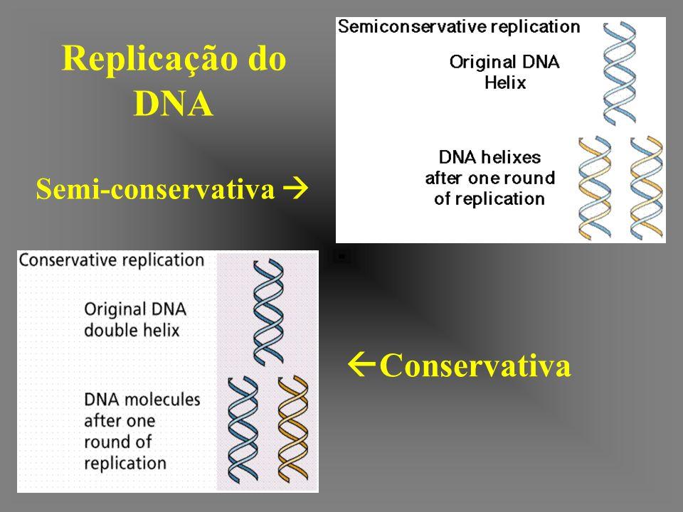Replicação do DNA Semi-conservativa  Conservativa