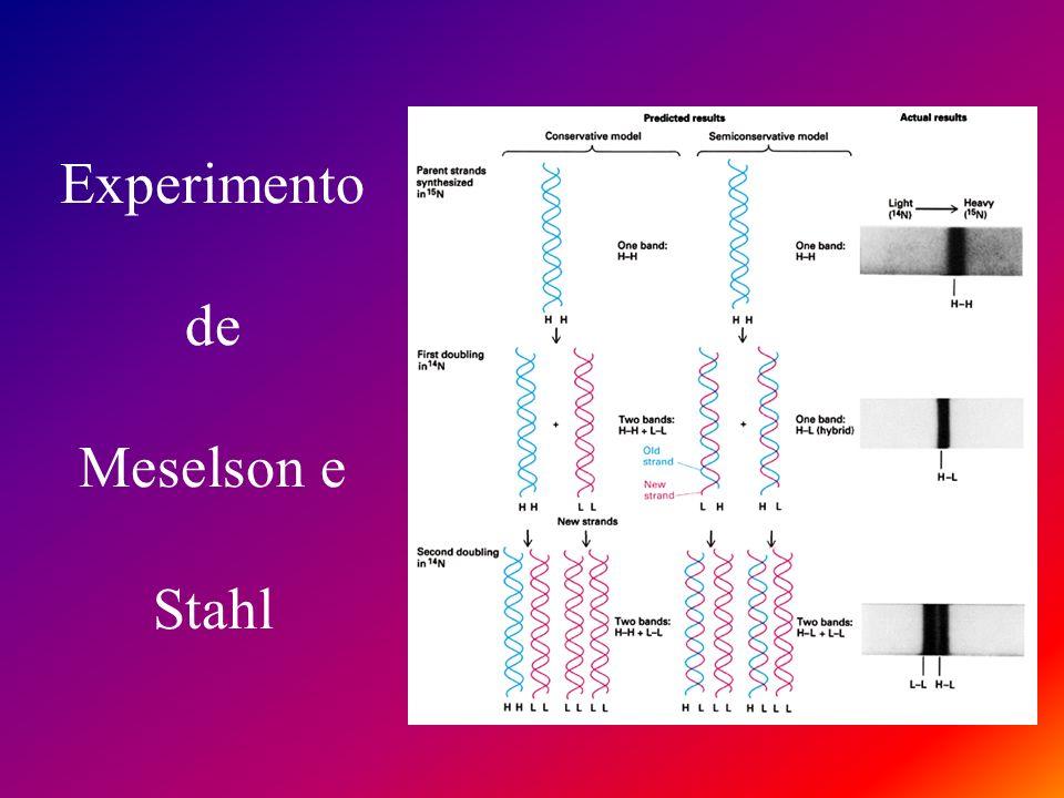 Experimento de Meselson e Stahl