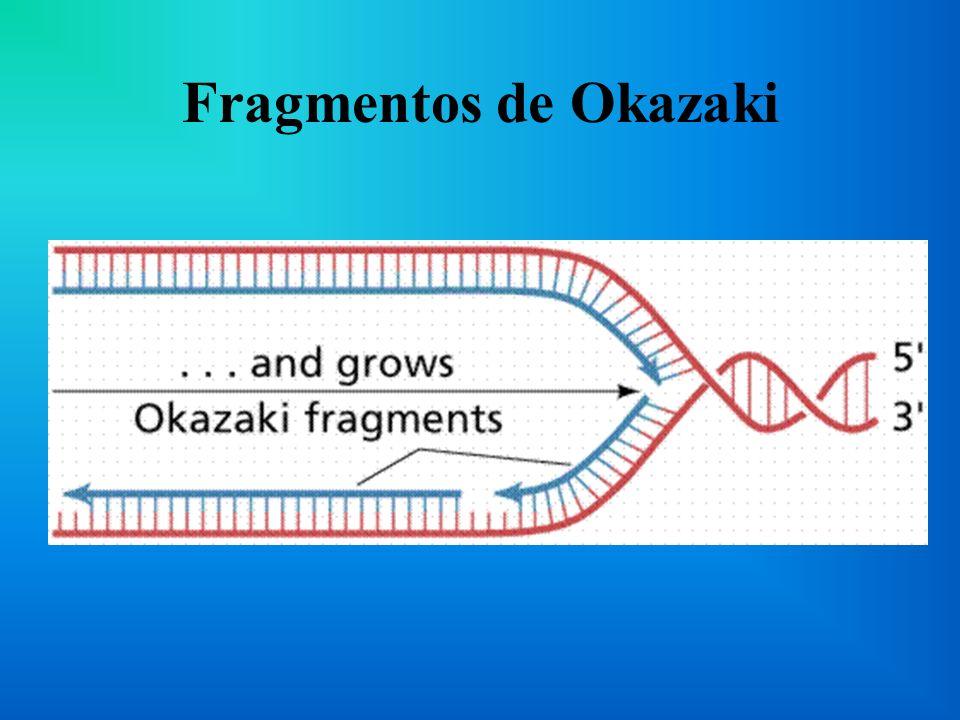 Fragmentos de Okazaki