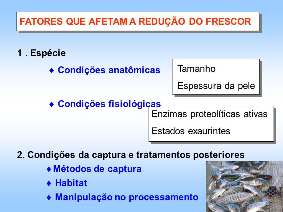FATORES QUE AFETAM A REDUÇÃO DO FRESCOR