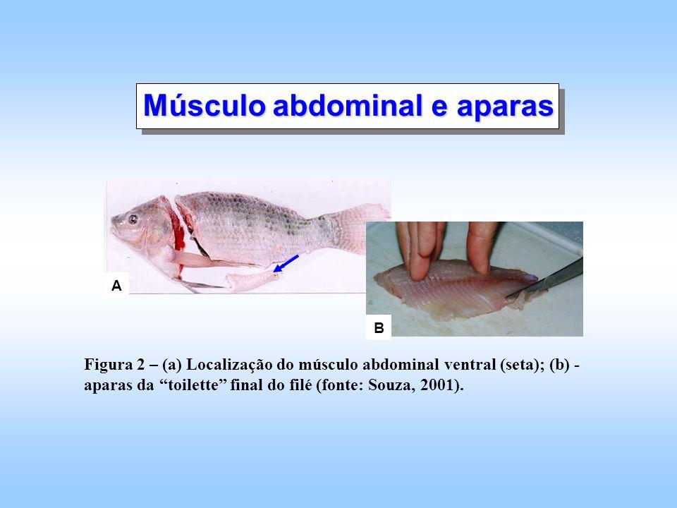 Músculo abdominal e aparas
