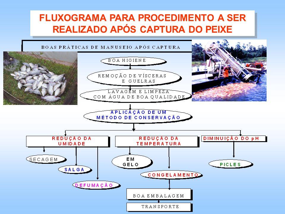 FLUXOGRAMA PARA PROCEDIMENTO A SER REALIZADO APÓS CAPTURA DO PEIXE
