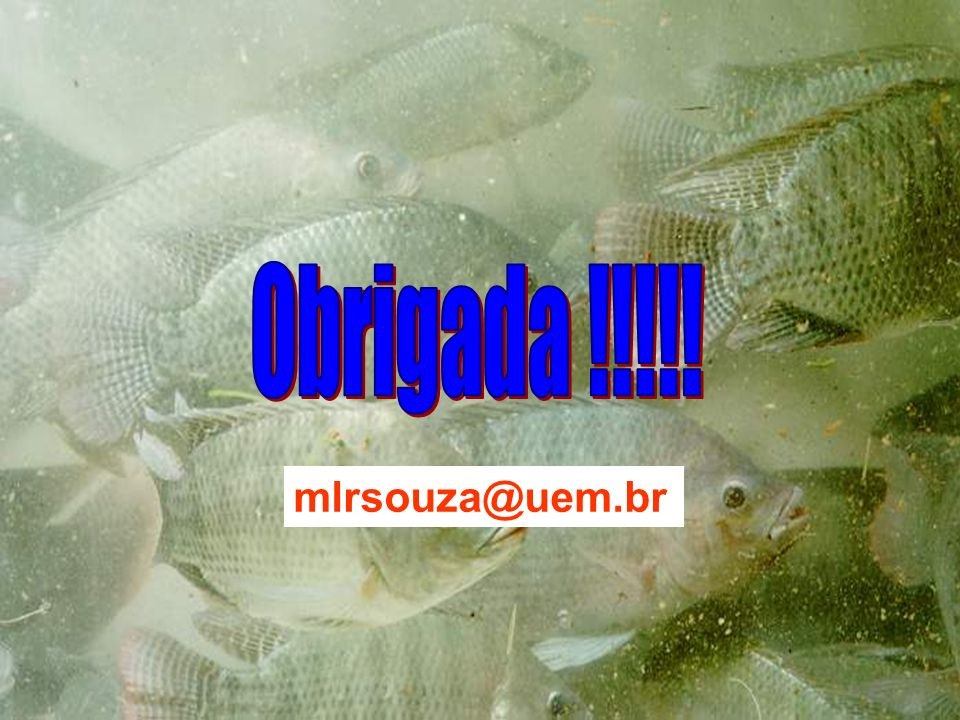 Obrigada !!!!! mlrsouza@uem.br