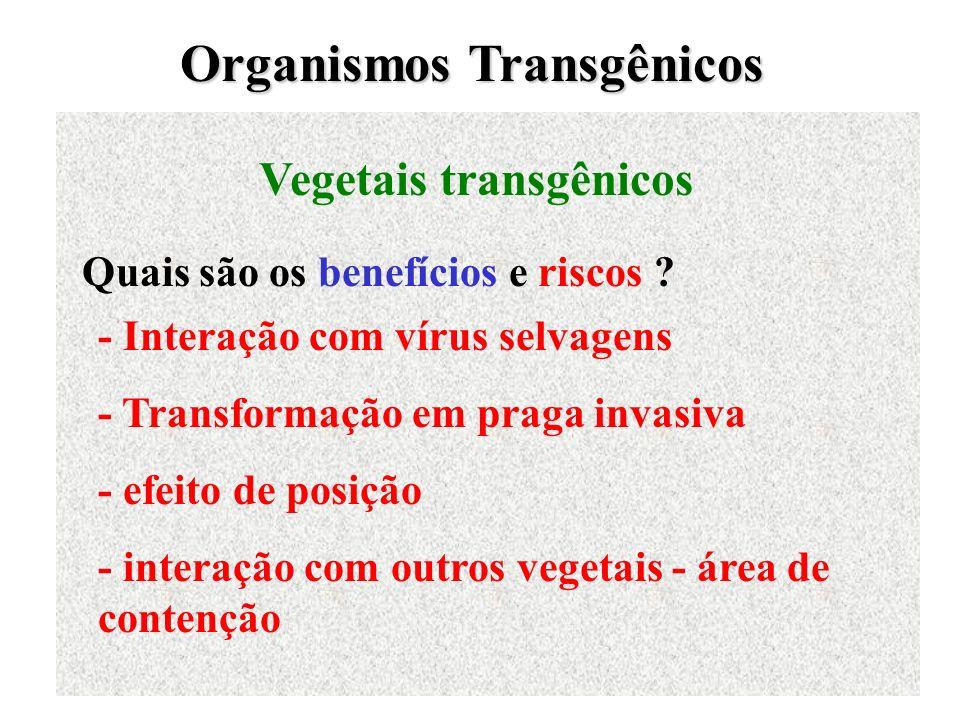 Organismos Transgênicos Vegetais transgênicos