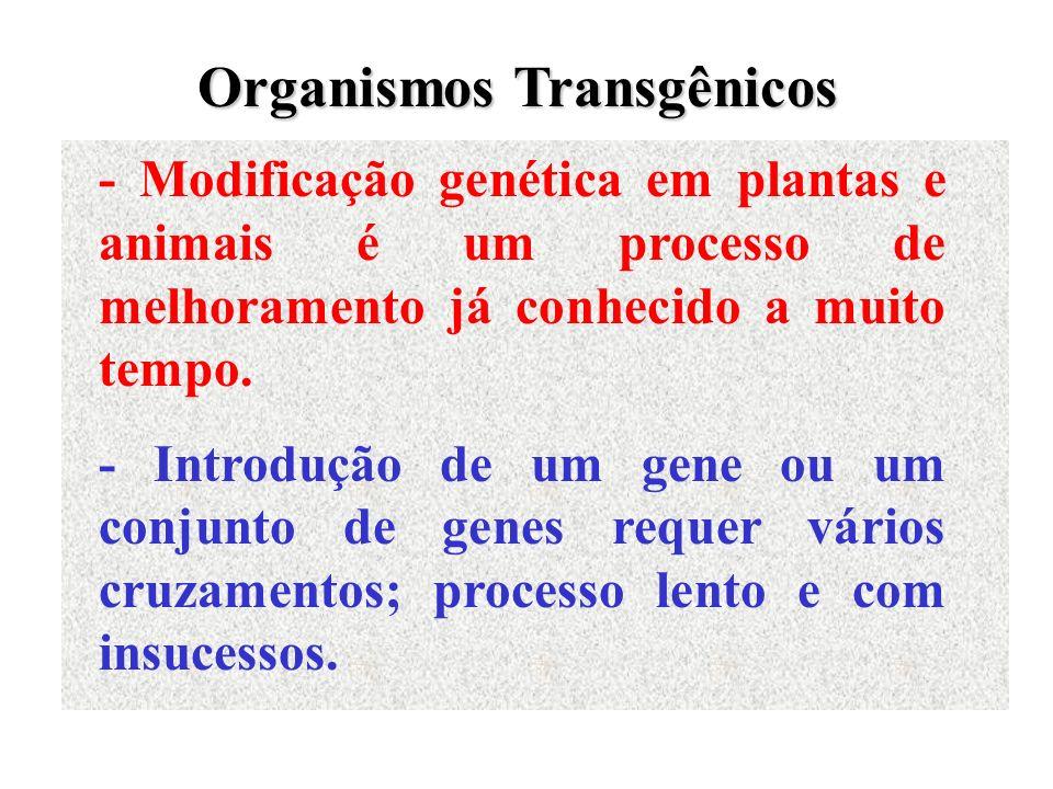 Organismos Transgênicos