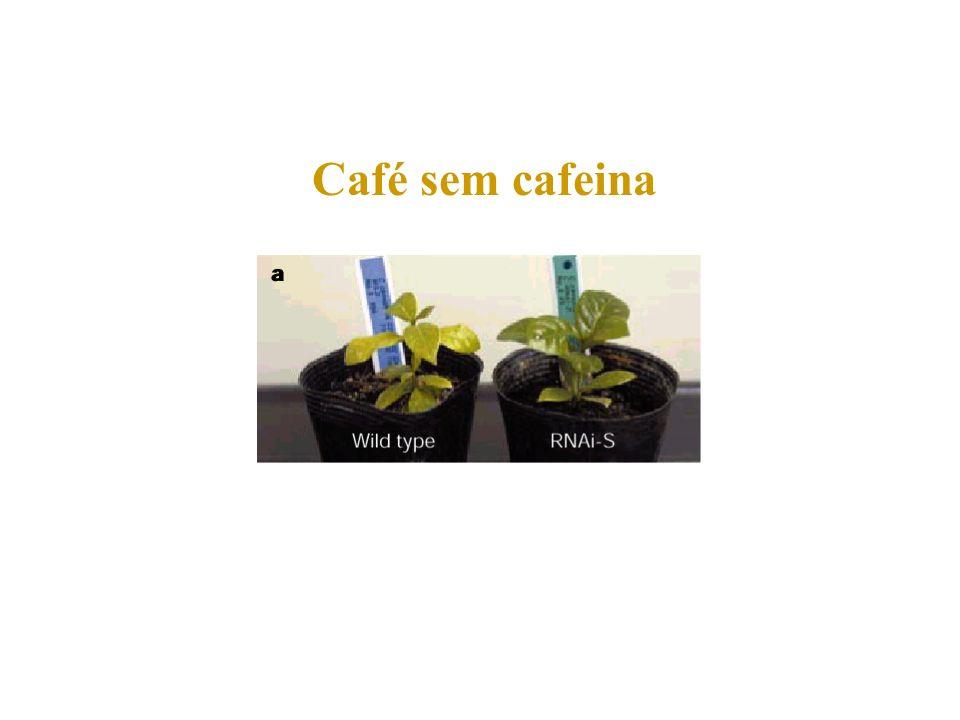 Café sem cafeina