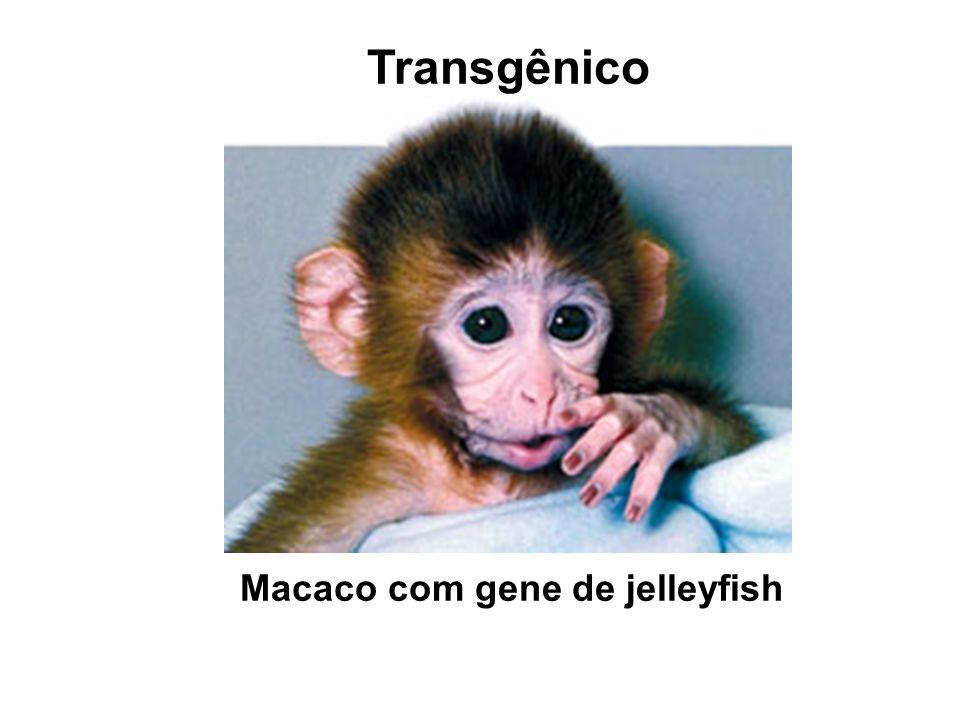 Macaco com gene de jelleyfish