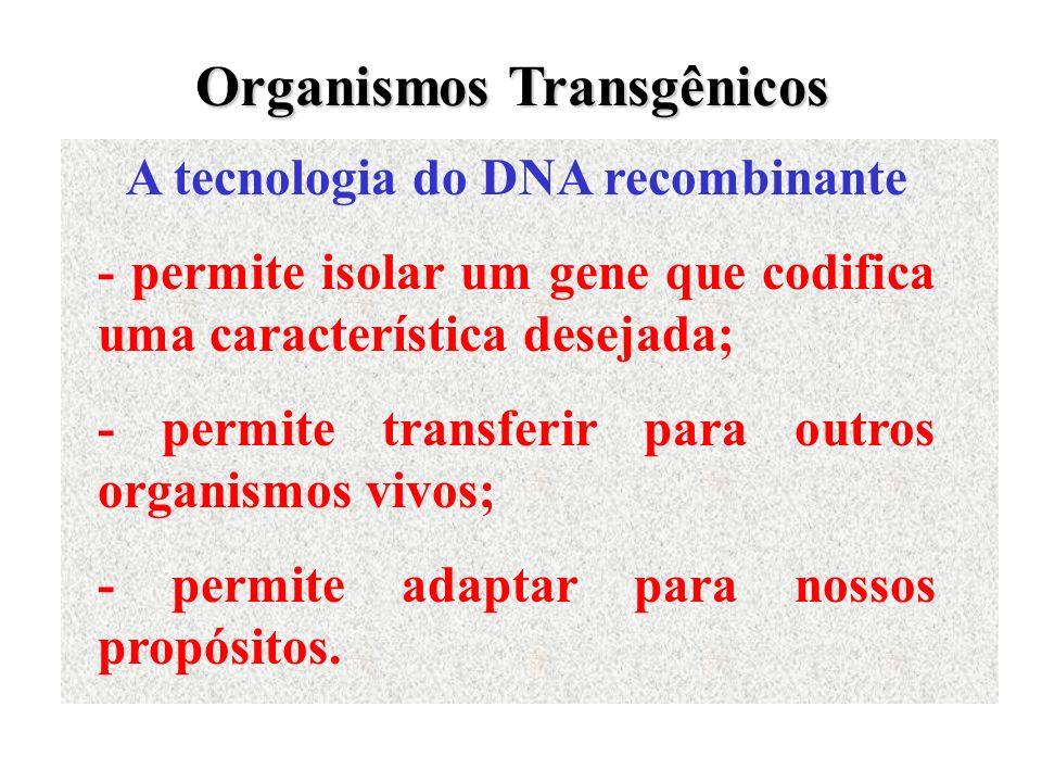 Organismos Transgênicos A tecnologia do DNA recombinante