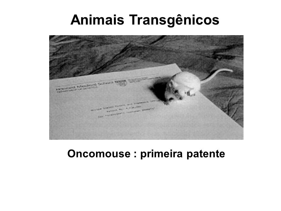 Oncomouse : primeira patente