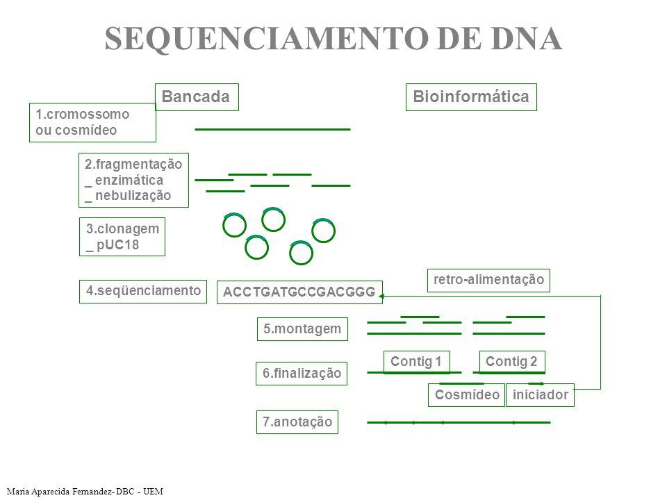 SEQUENCIAMENTO DE DNA Bancada Bioinformática 1.cromossomo ou cosmídeo
