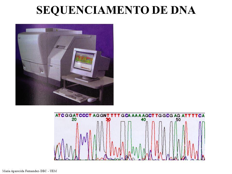 SEQUENCIAMENTO DE DNA Maria Aparecida Fernandez- DBC - UEM