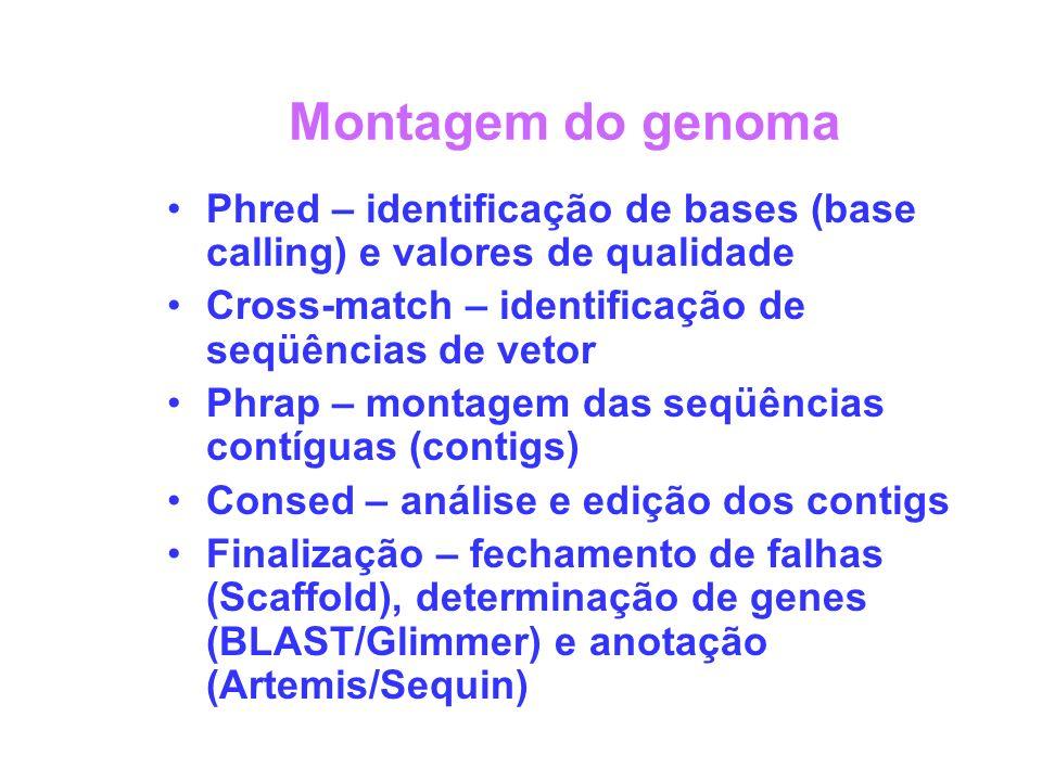 Montagem do genoma Phred – identificação de bases (base calling) e valores de qualidade. Cross-match – identificação de seqüências de vetor.