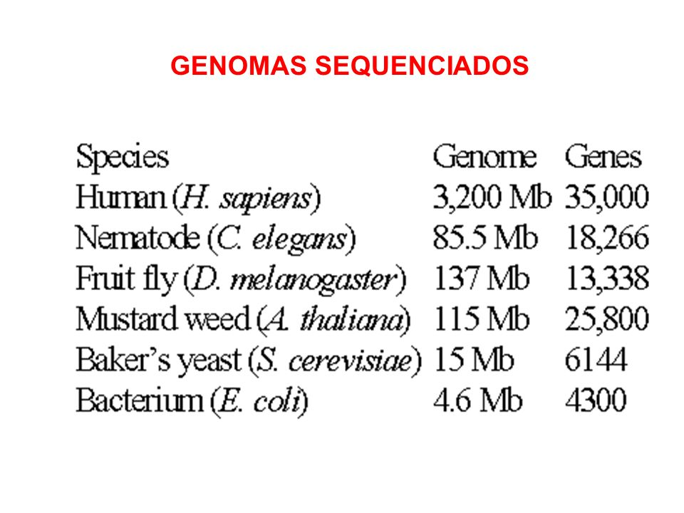 GENOMAS SEQUENCIADOS