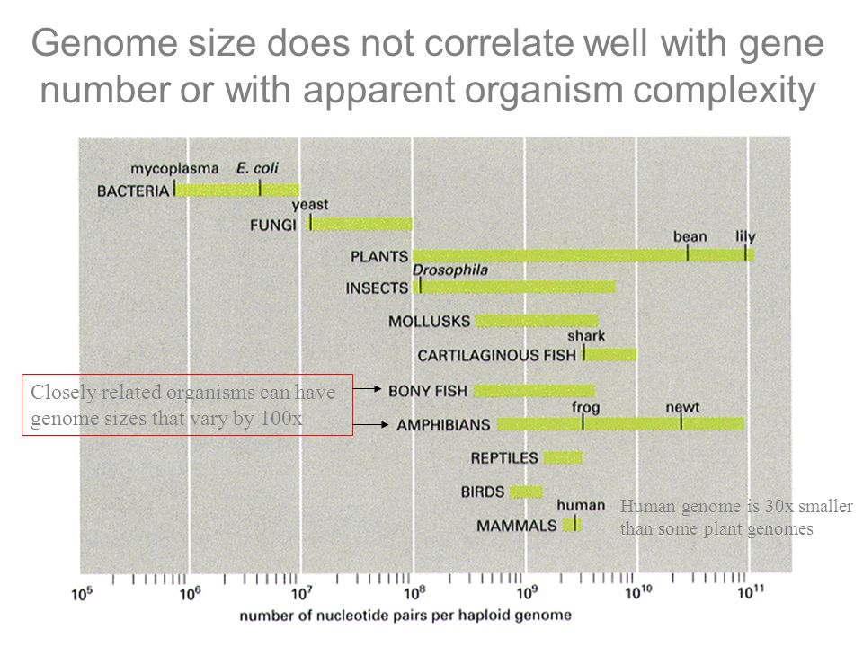 Genome size does not correlate well with gene number or with apparent organism complexity