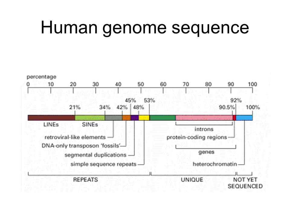 Human genome sequence