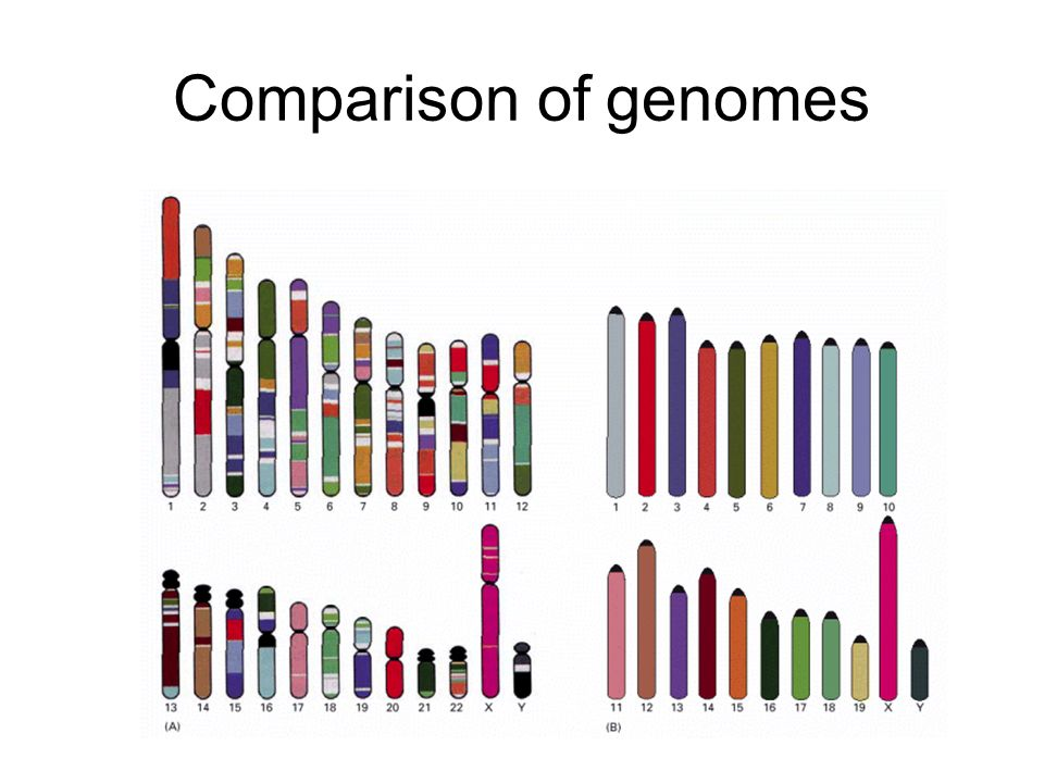 Comparison of genomes