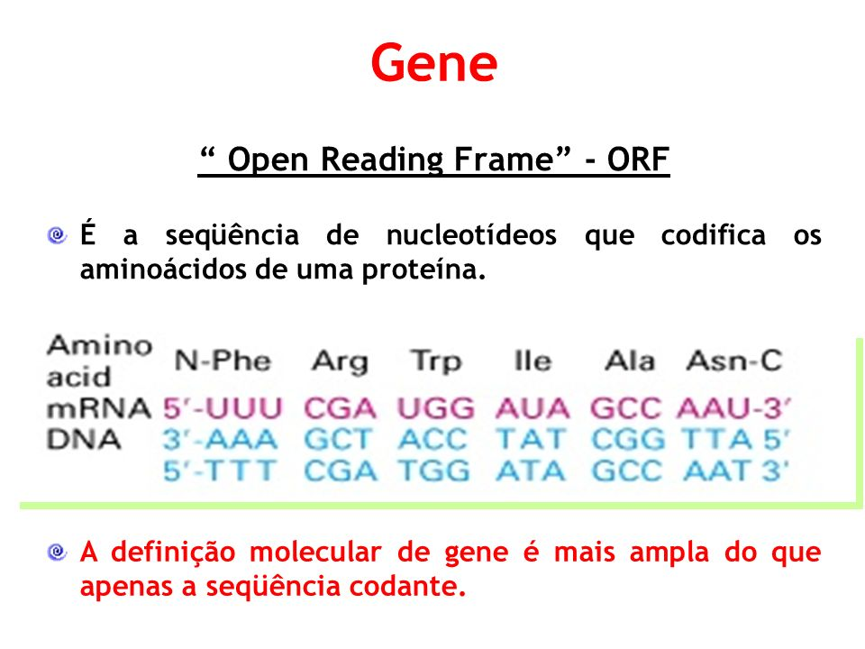 Open Reading Frame - ORF