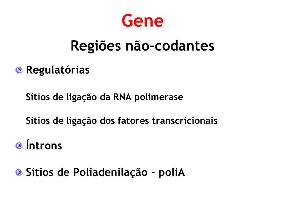 Gene Regiões não-codantes Regulatórias