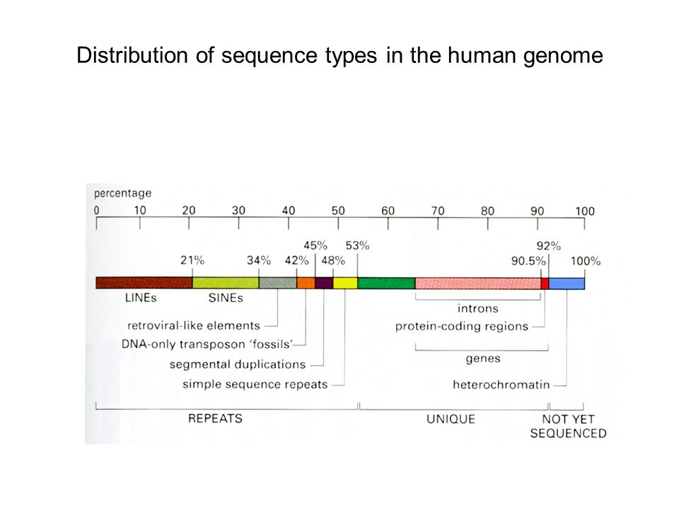Distribution of sequence types in the human genome