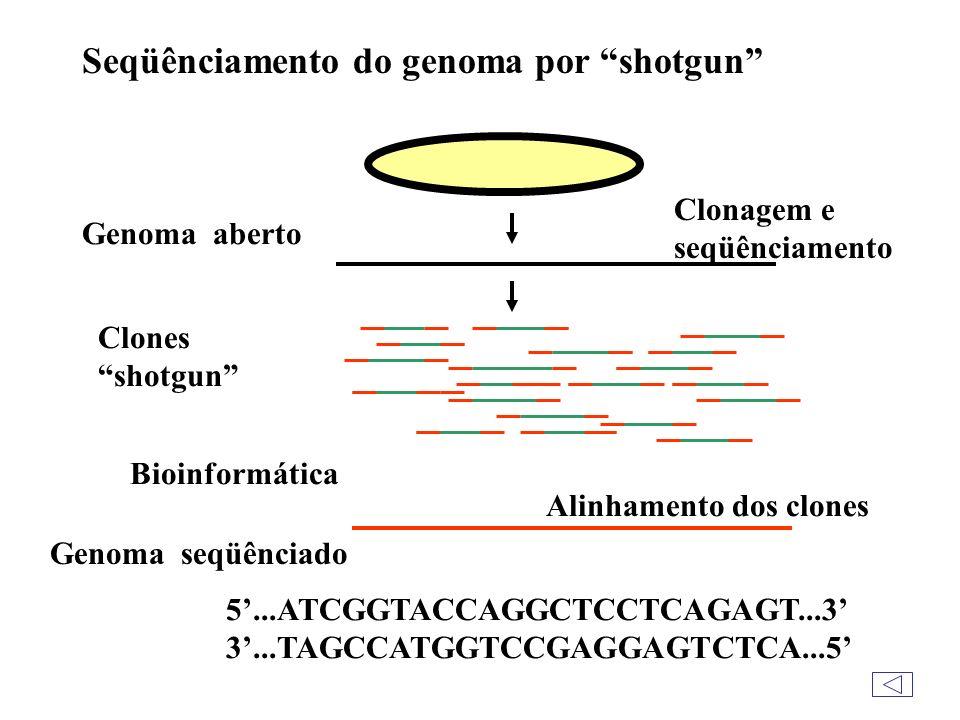 Seqüênciamento do genoma por shotgun