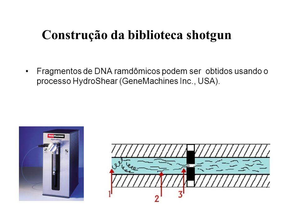 Construção da biblioteca shotgun