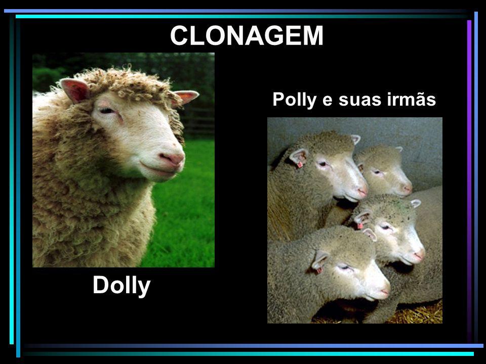 CLONAGEM Polly e suas irmãs Dolly