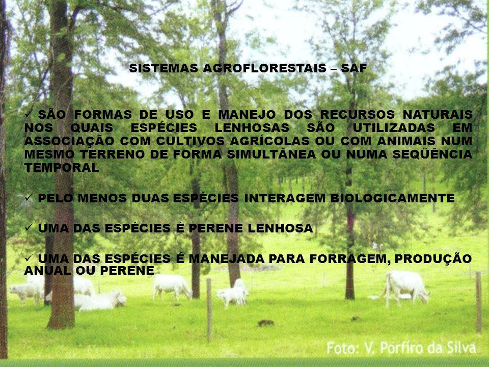 SISTEMAS AGROFLORESTAIS – SAF