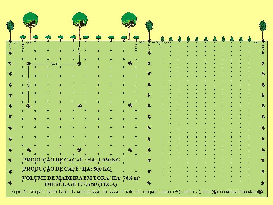 PRODUÇÃO DE CACAU / HA: 1.050 KG