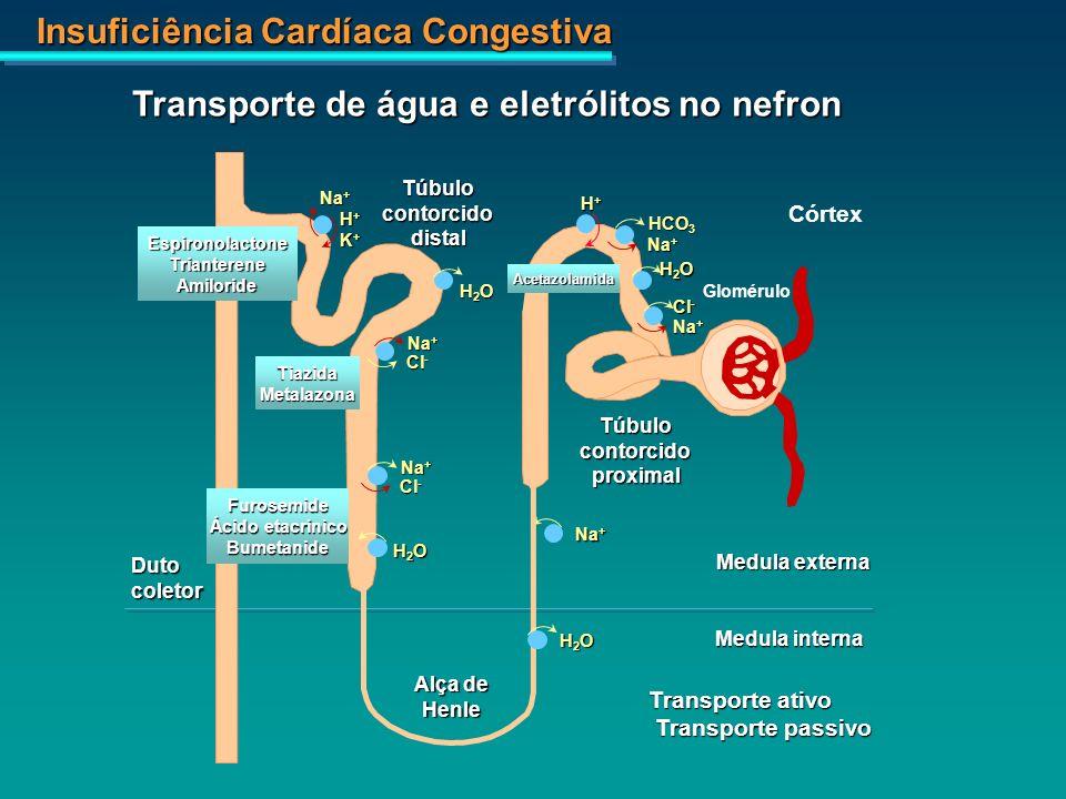 Transporte de água e eletrólitos no nefron