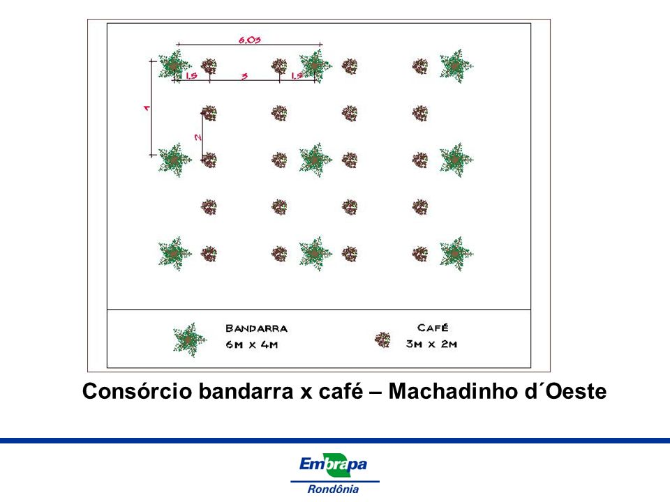 Consórcio bandarra x café – Machadinho d´Oeste