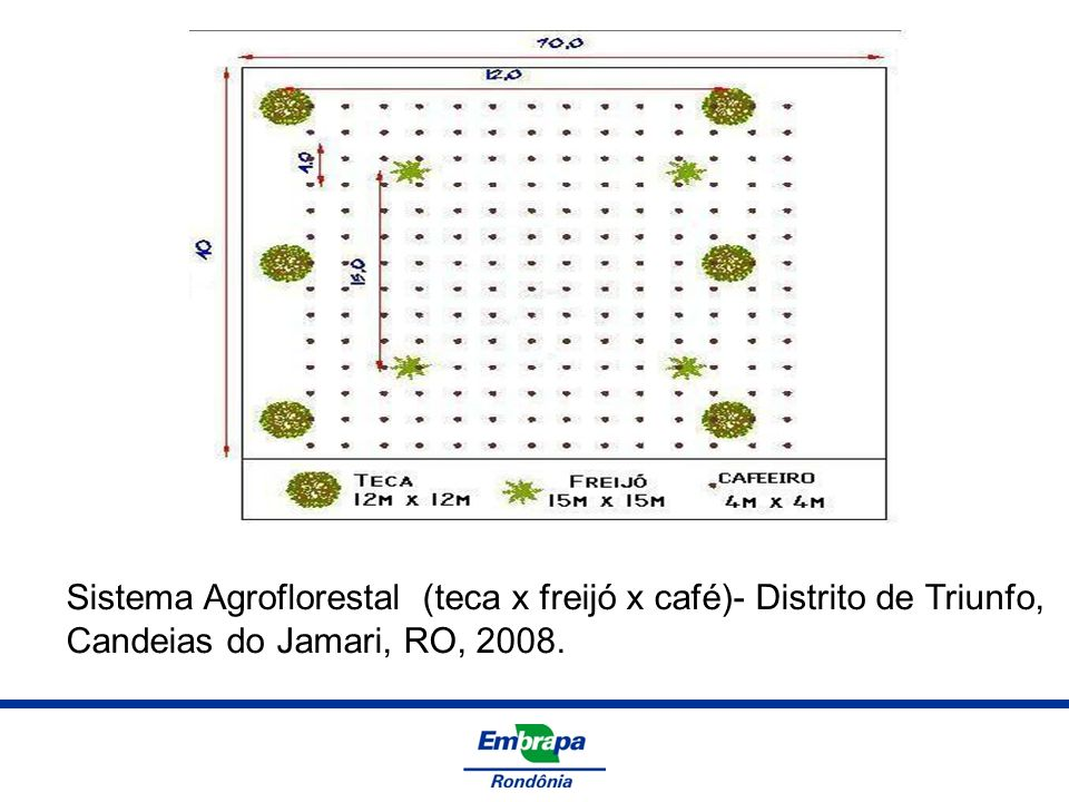 Sistema Agroflorestal (teca x freijó x café)- Distrito de Triunfo,